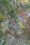 Spinne auf Spinnennetz im Sonnenlicht Lizenzfreie Stockbilder