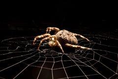 Spinne auf Web lizenzfreie stockbilder