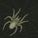 Spinne auf Web Stockfotos