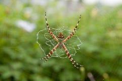 Spinne auf Web-Nahaufnahme Stockfotografie