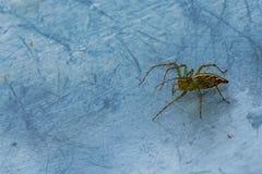 Spinne aus den Metallgrund stockfotografie