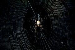Spinne in der Dunkelheit Lizenzfreies Stockbild