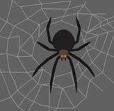 Spinne in der Mitte des Netzes Lizenzfreies Stockbild