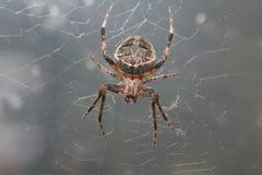 Spinne in der Natur Makro Lizenzfreie Stockfotografie