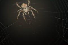 Spinne in der Wartezeit Stockbild