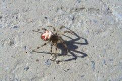 Spinne, die auf einen Stein geht Lizenzfreies Stockbild