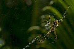 Spinne, die auf irgendein Opfer wartet Stockbild