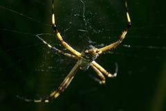 Spinne, die auf irgendein Opfer wartet Lizenzfreies Stockbild