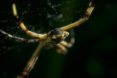Spinne, die auf irgendein Opfer wartet Stockbilder