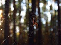 Spinne, die in der Sonne sich aalt Stockbild