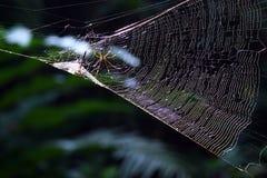 Spinne, die ein dragonfry jagt Lizenzfreies Stockfoto