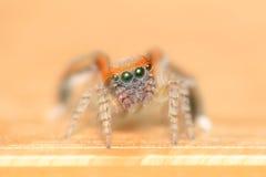 Spinne, die ein Netz macht Lizenzfreies Stockbild