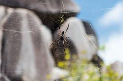 Spinne, die ein Web bildet Lizenzfreie Stockbilder