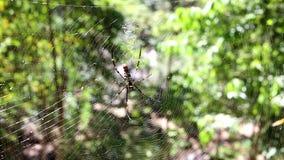 Spinne, die ein Web bildet stock video