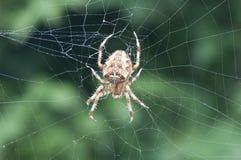 Spinne, die ein Web spinnt   Lizenzfreies Stockbild