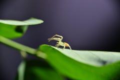 Spinne, die ein Web spinnt Lizenzfreie Stockfotos