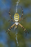 Spinne, die eine Biene isst stockbilder