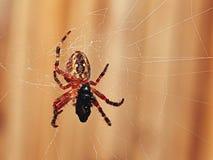 Spinne, die eine Wanze isst Lizenzfreies Stockbild