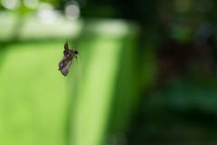 Spinne, die einen Schmetterling isst Lizenzfreie Stockfotos