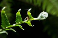 Spinne, die an Farnanlage hält Stockbilder