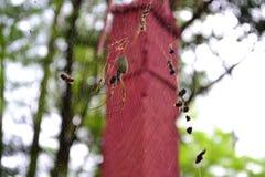 Spinne, die sein Netz spinnt Lizenzfreies Stockbild