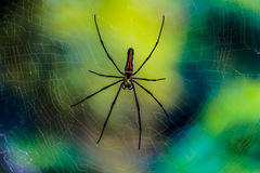Spinne eine Natur ` s Schaffung auf seinem Netz stockbilder