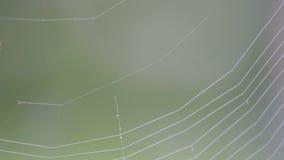 Spinne in einem Netz stock footage