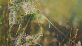 Spinne in einem Web stock video