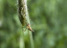 Spinne in einem Web lizenzfreie stockbilder