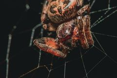 Spinne in einem Web stockbild