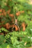 Spinne - Fraser Insel Stockfotos