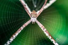 Spinne im Garten Stockbild