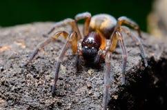 Spinne im Garten stockbilder