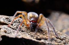 Spinne im Garten stockfotos