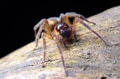 Spinne im Garten lizenzfreie stockfotografie