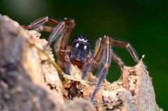 Spinne im Garten lizenzfreies stockfoto
