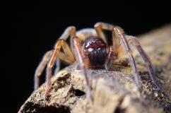 Spinne im Garten lizenzfreie stockfotos