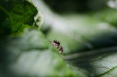 Spinne im Gras Stockbild
