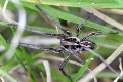 Spinne im Gras lizenzfreie stockfotografie
