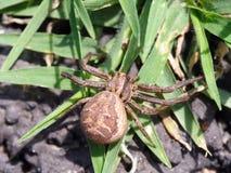 Spinne im hinteren Garten lizenzfreie stockfotos