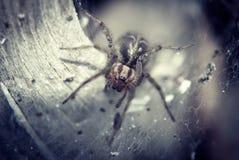 Spinne im Nest Stockbilder