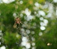 Spinne im Netz über Grün lizenzfreies stockfoto