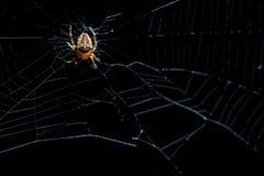 Spinne im Netz Lizenzfreie Stockfotografie