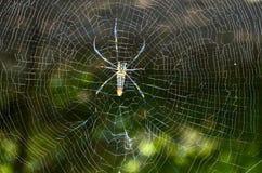 Spinne im Netz stockbild