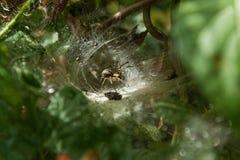 Spinne im Netz Stockbilder