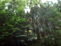 Spinne im Netz Stockfotografie