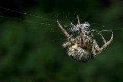 Spinne im Netz im Sommer stockfoto