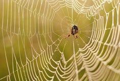 Spinne im Netz während des Sonnenaufgangs Stockfotos