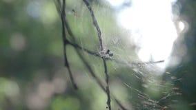 Spinne im Netz im Wind stock video