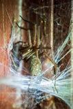 Spinne im Spinnennetz stockfotografie